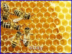 BB05 Bee Blanket 5 Gallon Pail Heater withFixed Thermostat 110°F, 120V, 120 Watt