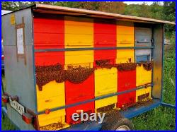 Beekeeping Equipment National Slovenian AZ beehive 20-frames with feeder