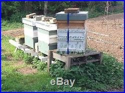 Bees in hive national big strong colony 2019 queen