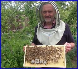Honeybees Nucleus of Bees Beekeeping Langstroth Perfect for Flow Hive