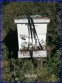 Langstroth Beehive, complete with majority Carniolan some Buckfast Honey Bees