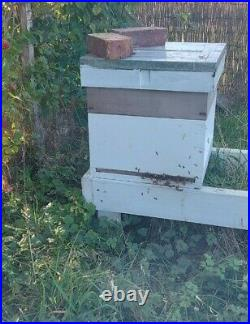 National Beehive x2, complete with Italian Buckfast Honey Bees x2