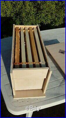 Nucleus Nuc Hive Bees Colony