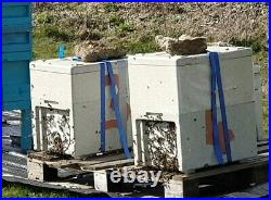 Polystyrene Double Nucleus Beehive, National With 12 Brood Frames In All Stages