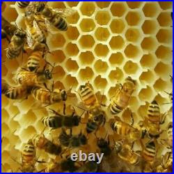 Upgraded Bee hive Brood Box Beekeeping House Or 7 Free move Honey BEE Hive Frame